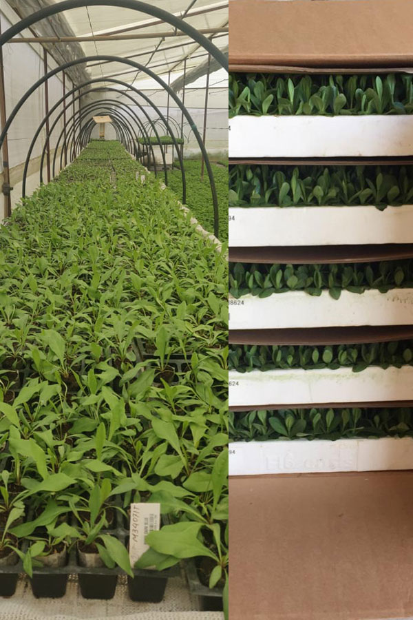 perishable goods- live plants